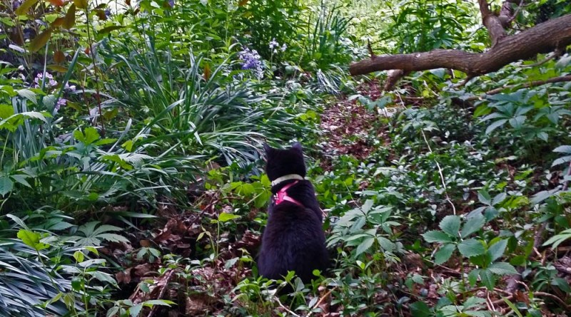 Mimi in the woodland garden