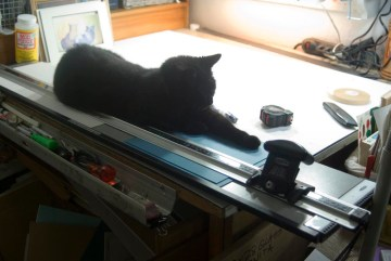 black cat with mat cutter