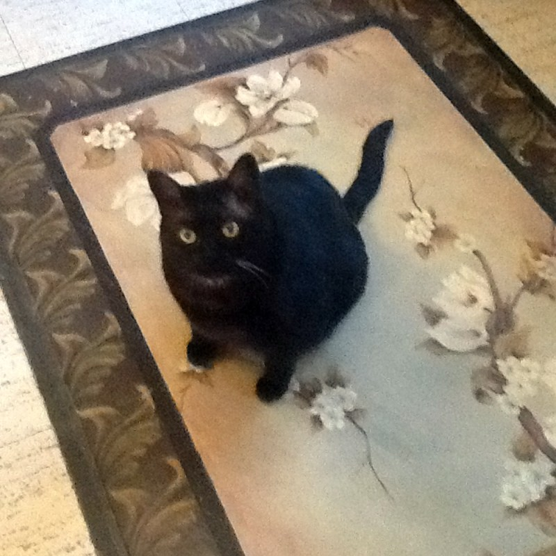 black cat on rug