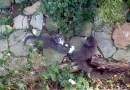 Rescue Story: Sputnik and Thistle, August 2005