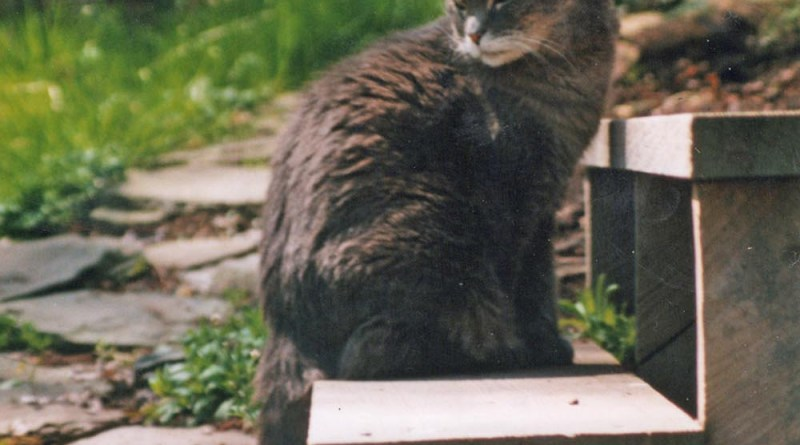 Vintage Photo: Moses and Forsythia, 2005
