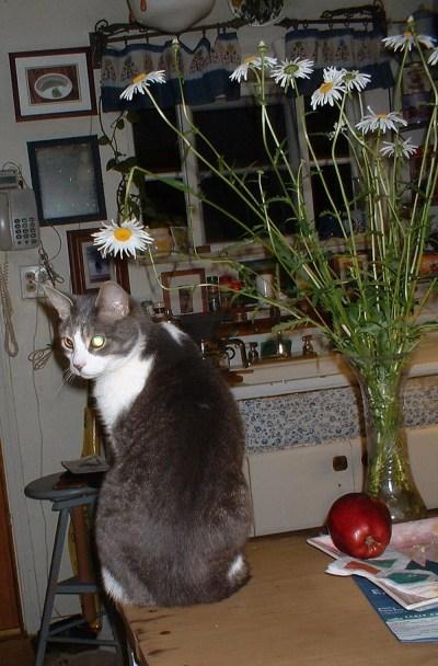 cat not looking at daisy