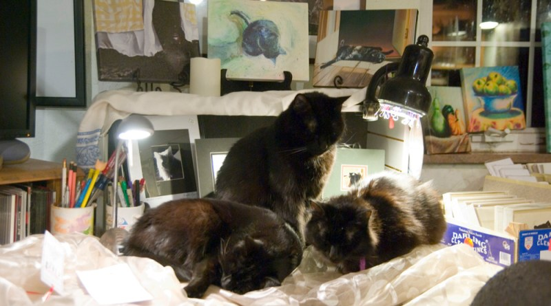 Mewsette, Bella and Basil settle in an approved spot under the kitty keep-warm lights.