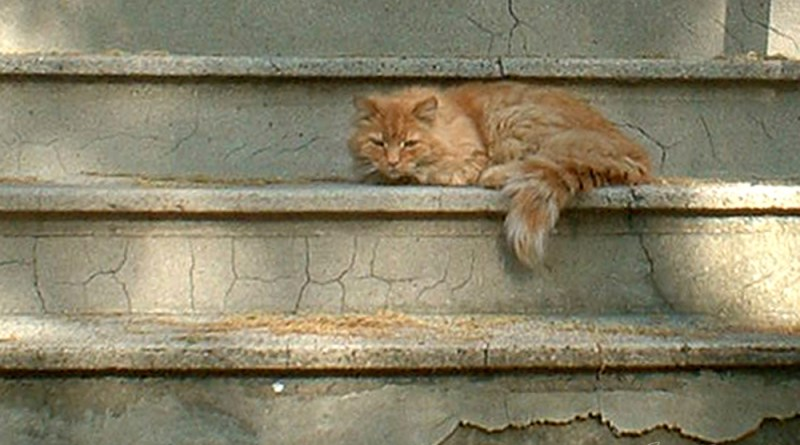 orange cat on steps