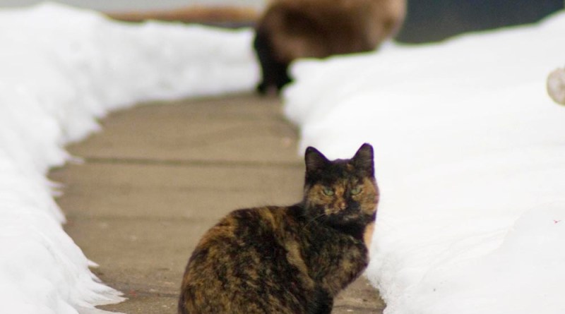 two feral cats