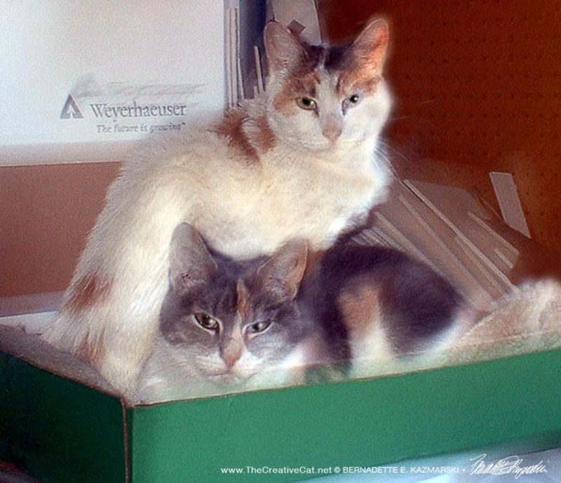 calico cats in box