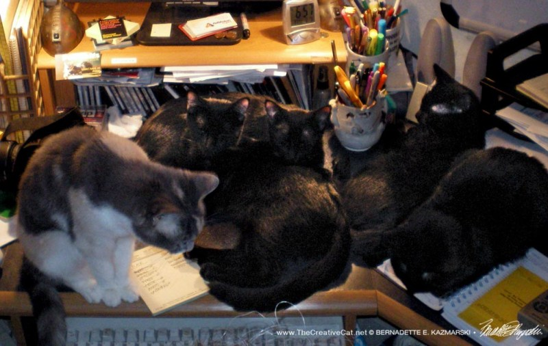 five cats on desk