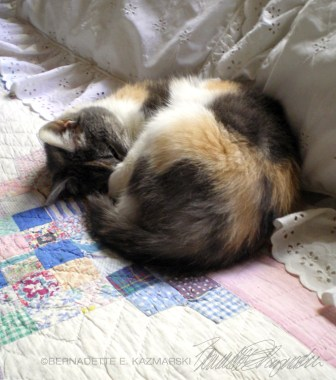calico cat on quilt