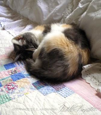 calico cat on quilt