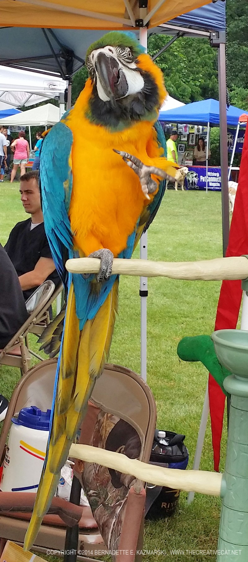 A blue and gold macaw.