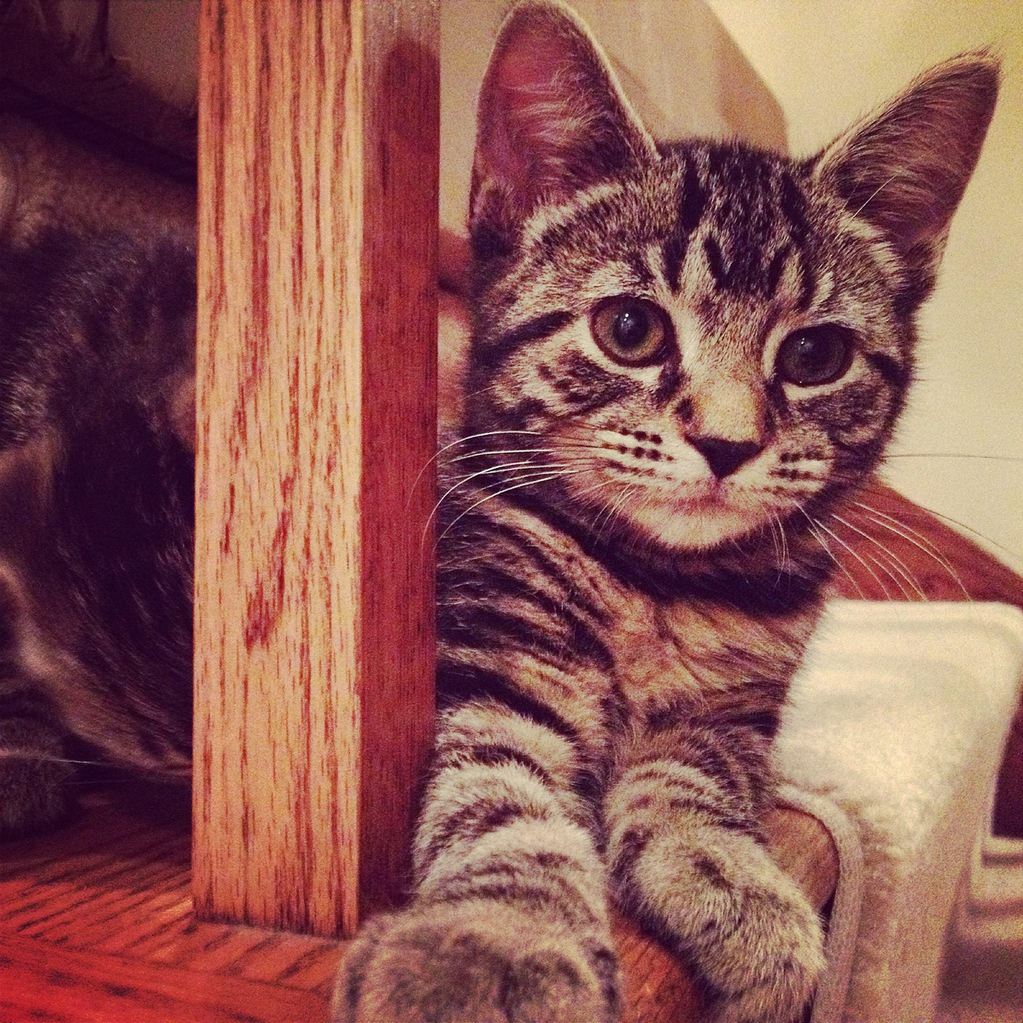 Lucy Cat Net