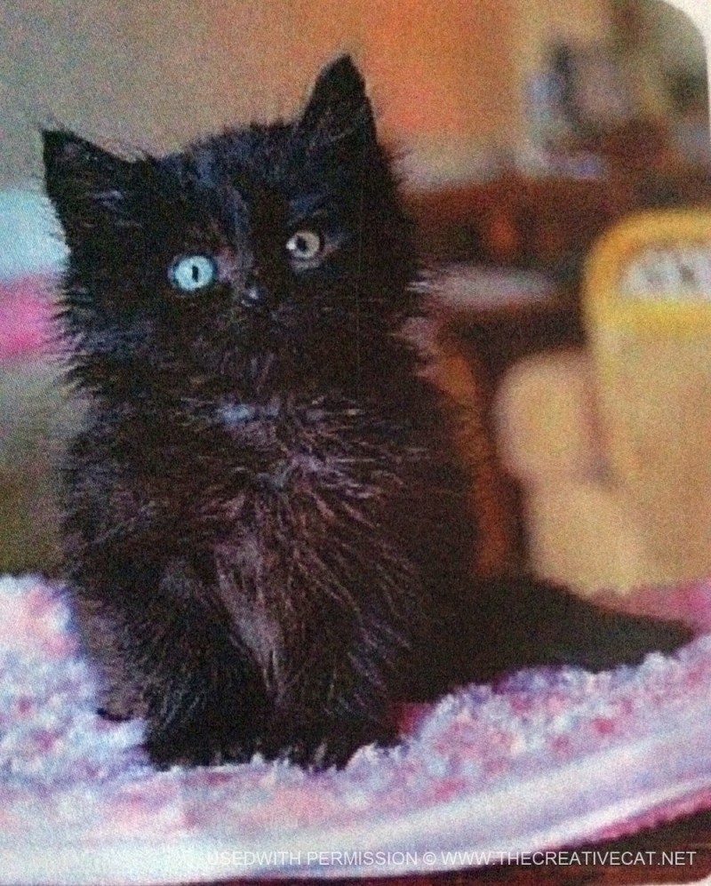 Princess's baby picture