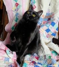 three black cats on quilt.