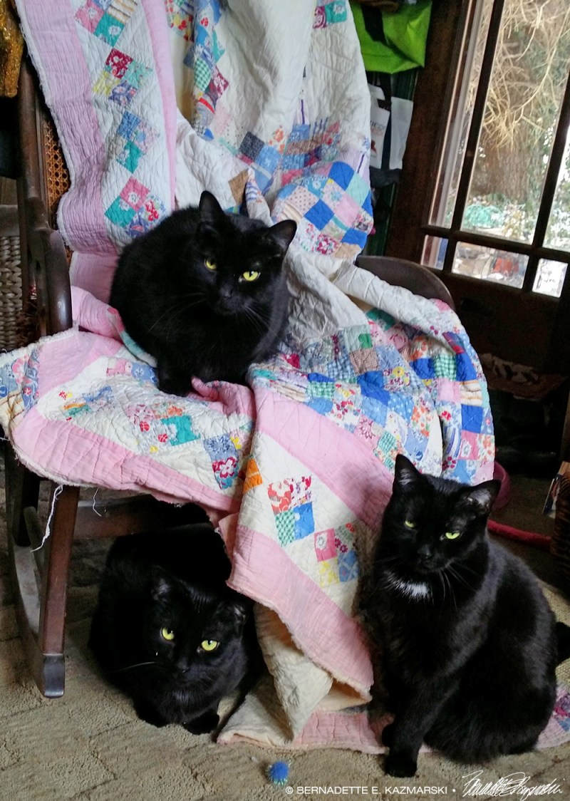 black cat on quilt