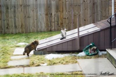 The ferals next door.