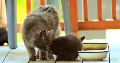 Rescue Story: Mom and Kittens, Rescued