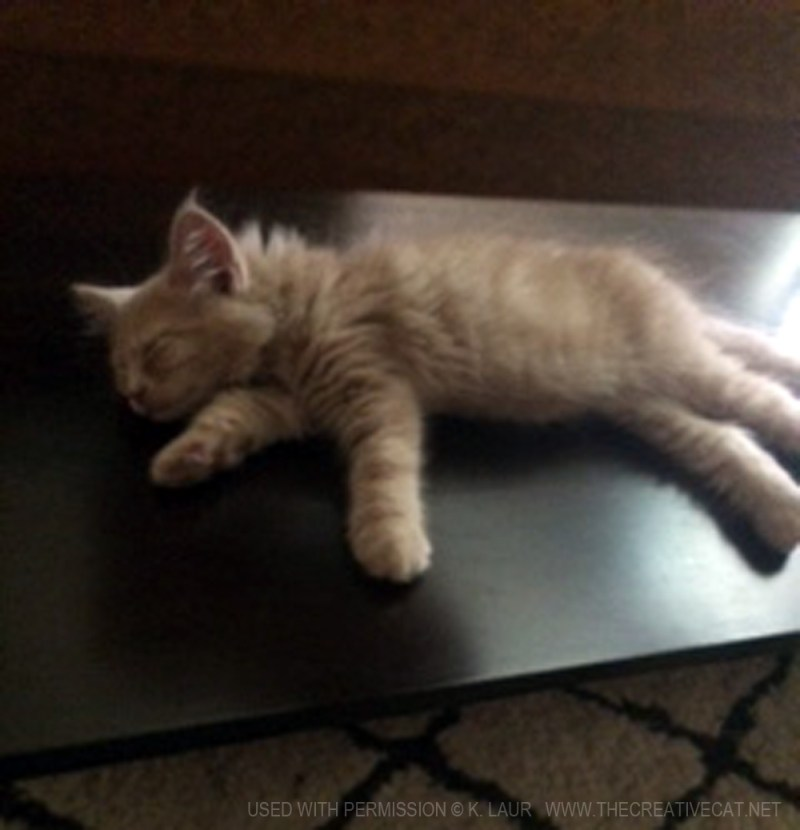 Samwise has a nap on the tabletop.
