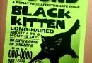 fournd black kitten sign
