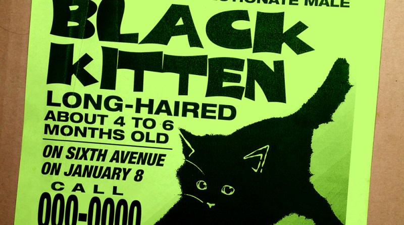 fournd black kitten sign