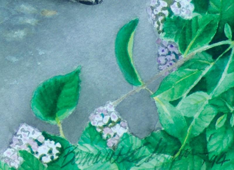 watercolor of hydrangeas