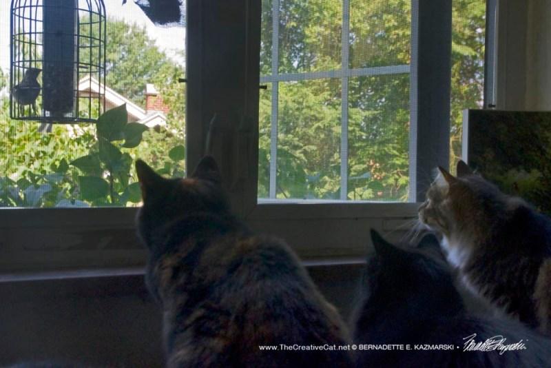 three cats watching bird