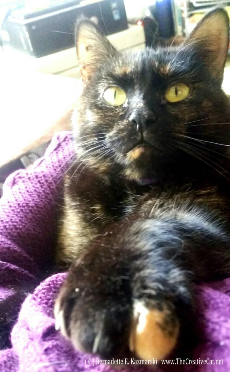 Sienna on my lap.