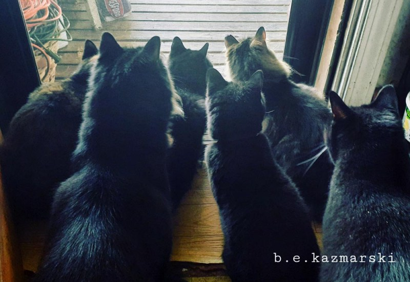 Six cats staring at a squirrel.