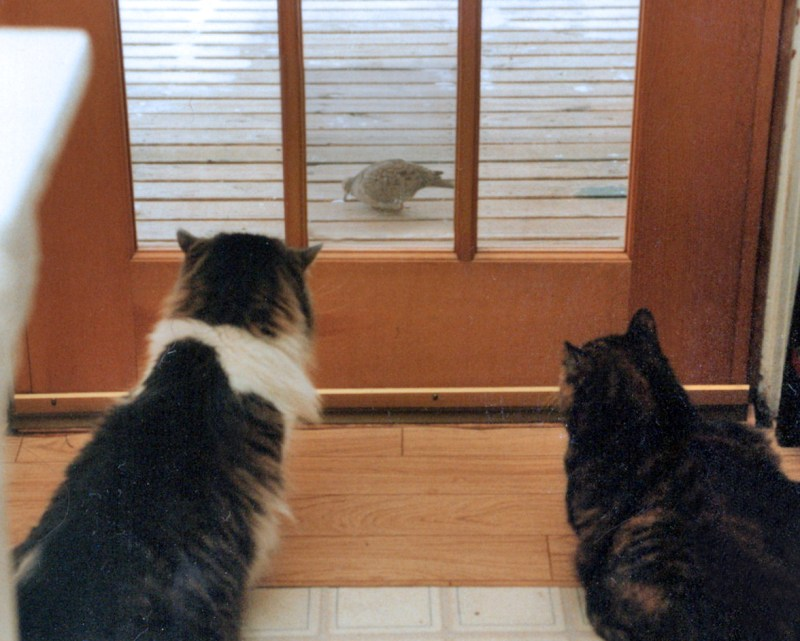 two cats watching birds