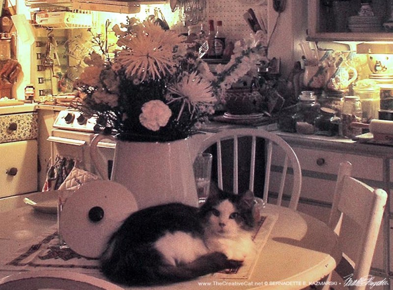 cat on table with flowers