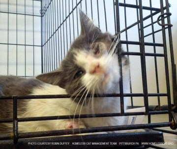 homeless cat management team pittsburgh pa rescued cat
