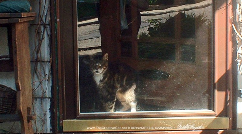 tabby cat at door