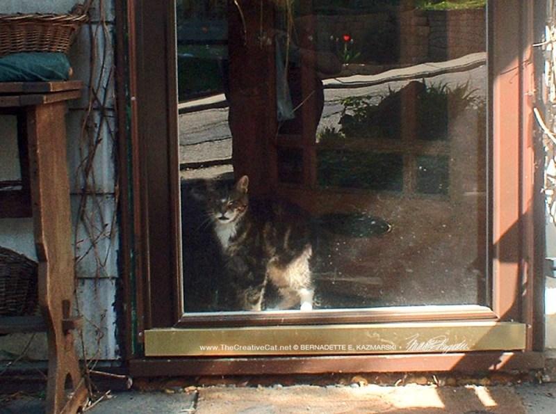 tabby cat at door