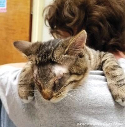 Stevie gives hugs.
