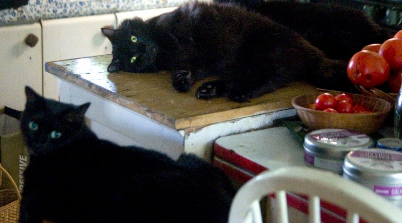 three black cats and tomatoes