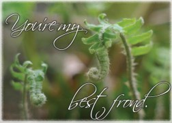 two young ferns