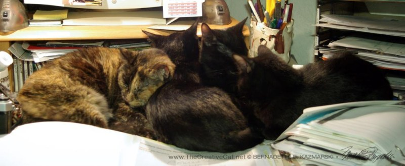 Giuseppe, Sunshine and Bean cuddle up with Cookie.