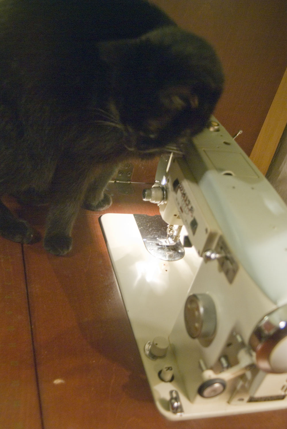 black cat with sewing machine