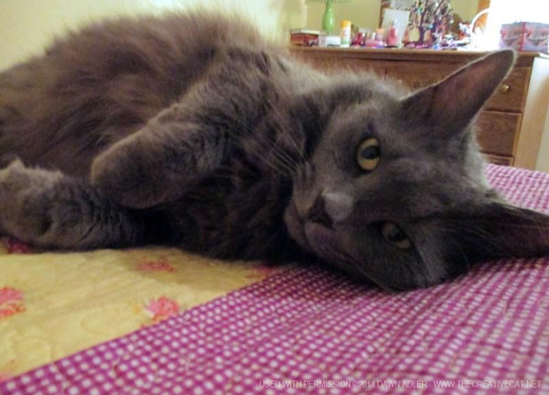 log-haired gray cat