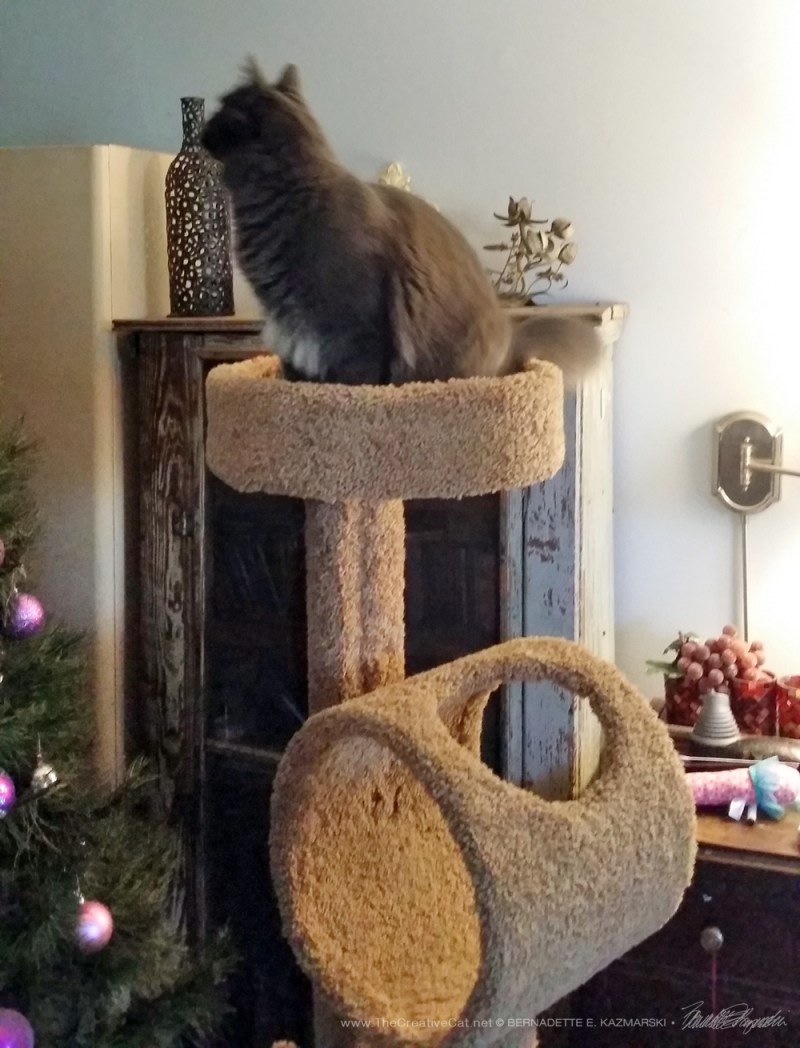 Teddy discovers the cat tree and the Christmas tree.