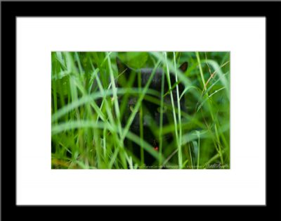 The Huntress: Listening, framed photo.