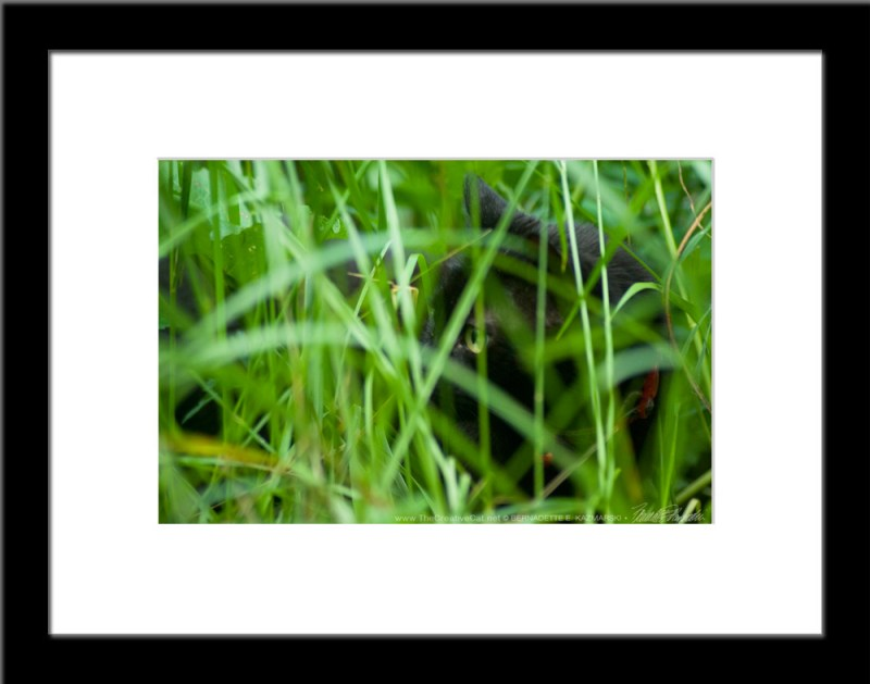 The Huntress: Watching, framed photo.