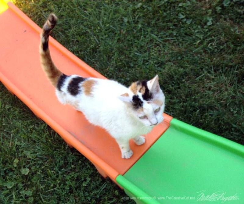 calico cat on slide