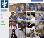 Gallery of cats at UC Davis Veterinary School.
