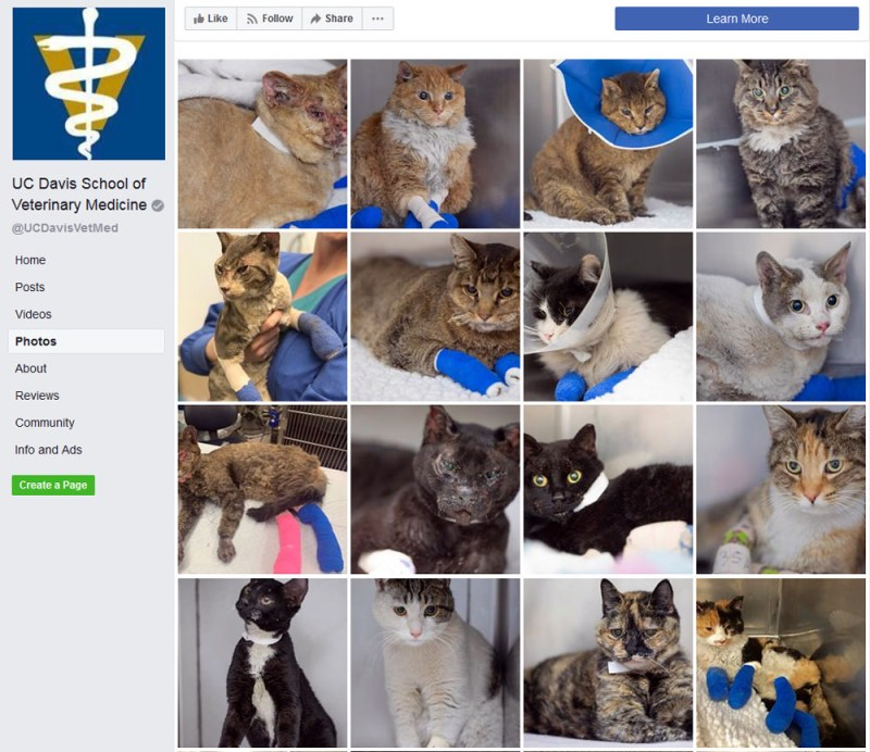 Gallery of cats at UC Davis Veterinary School.