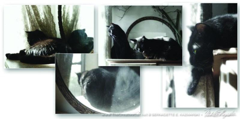 Victoriana Cats in dreamy semi-sepia tones