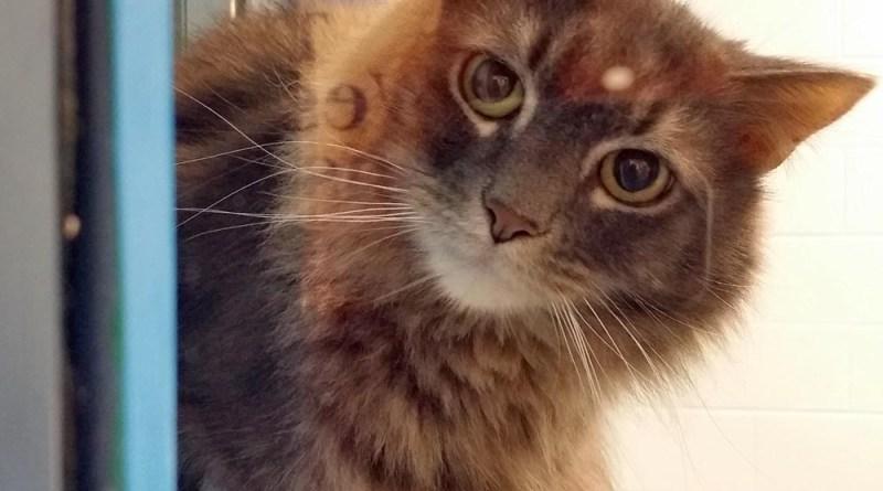 tabby cat in shelter