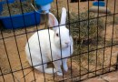 white rabbit in cage