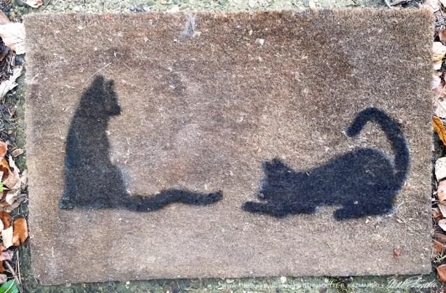 my old cat doormat