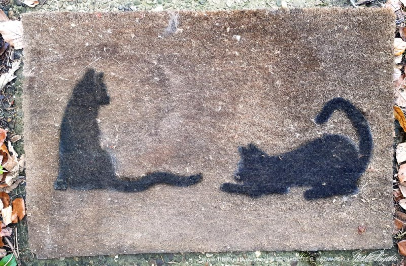my old cat doormat