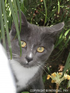 The photo of Smokey